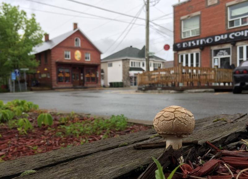 <p>Un champignon appelle le d&eacute;but du march&eacute;!</p>