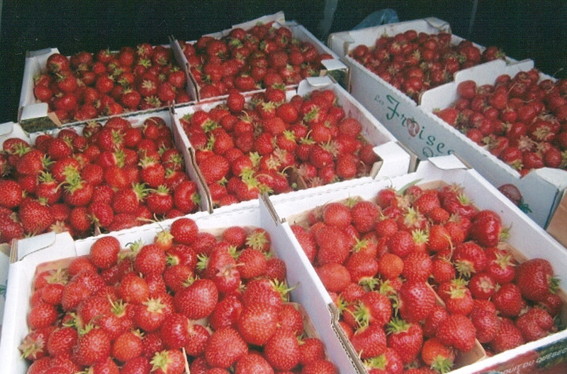 <p>Autocueillette de fraises et framboises.</p>