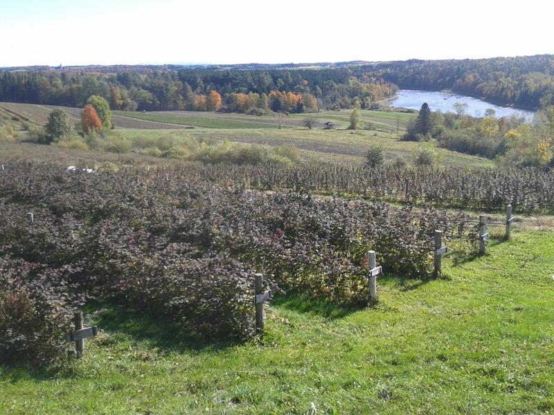 <p>Jardins des &Icirc;les<br />6505, chemin de la Rivi&egrave;re<br />Ascot Corner (Qu&eacute;bec)<br />J0B 1A0</p>