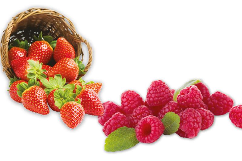 <p>D&eacute;licieuses fraises et framboises offertes en autocueillette.</p>
