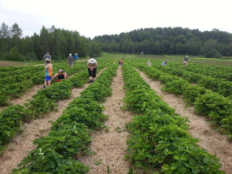 <p>Autocueillette de fraises, citrouilles et sapins en saison.&nbsp;</p>
