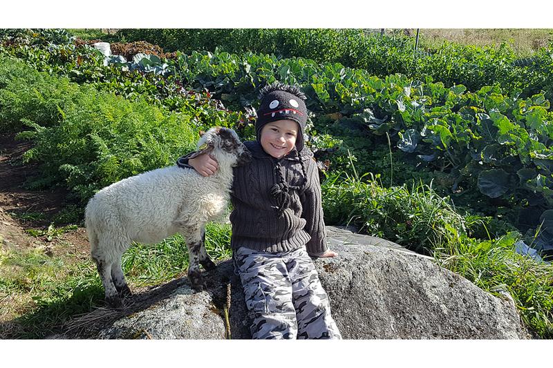 La bergerie comprend 150 brebis et offre un environnement sain. L'été vous pouvez profiter de la vue magnifique sur les prés et voir les moutons qui y gambadent.