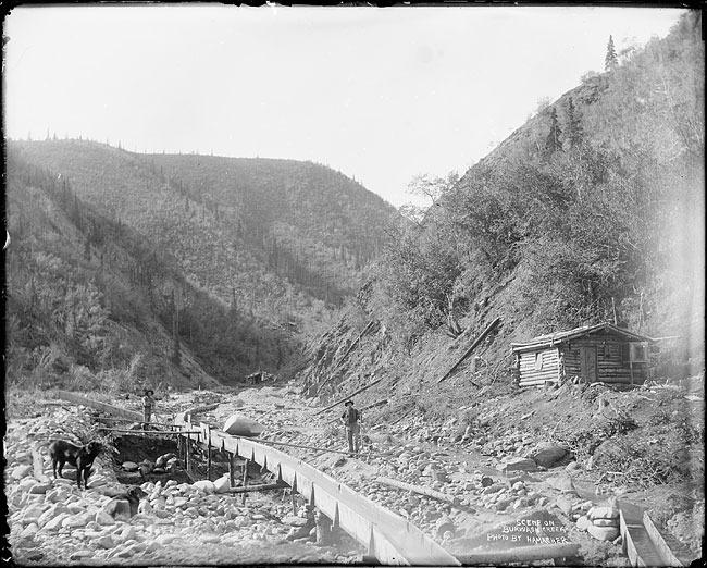 <p>En juillet 1903, Skookum Jim et Dawson Charlie, les deux autochtones qui avaient d&eacute;clench&eacute; la Ru&eacute;e vers l&rsquo;or du Klondike, ont trouv&eacute; un filon &agrave; l&rsquo;est du lac Kluane. Le printemps suivant, 2&thinsp;000 mineurs avaient d&eacute;j&agrave; enregistr&eacute; leurs concessions dans la r&eacute;gion.<br /><br />Le village de p&ecirc;che autochtone M&auml;n Sh&igrave;-aya (o&ugrave; le lac bifurque) a &eacute;t&eacute; rebaptis&eacute; Kluane, et s&rsquo;est transform&eacute; en lieu de service pour les mineurs; peu apr&egrave;s, la communaut&eacute; est devenue Silver City.<br /><br />En 1904, une d&eacute;couverte d&rsquo;or sur le ruisseau Burwash a attir&eacute; les prospecteurs plus au nord. Mais les profits n&rsquo;ont pas &eacute;t&eacute; &agrave; la hauteur de leurs esp&eacute;rances, si bien qu&rsquo;en 1906, ils avaient presque tous quitt&eacute; la r&eacute;gion et il ne restait plus qu&rsquo;un habitant &agrave; Silver City. Par contre, l&rsquo;un d&rsquo;eux a &eacute;t&eacute; chanceux; il s&rsquo;agit de Louis Jacquot, qui semble avoir trouv&eacute; 220 onces d&rsquo;or, la plus grosse quantit&eacute; d&eacute;couverte dans la r&eacute;gion.<br /><br />Photo : Prospection mini&egrave;re dans le ruisseau Burwash, pr&egrave;s du lac Kluane<br />Cr&eacute;dit photo : Archives du Yukon, Fonds E.J. Hamacher</p>