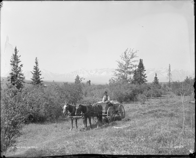 <p>En 1904, la Kluane Wagon Road (route &agrave; wagons de Kluane) a &eacute;t&eacute; construite entre Whitehorse et le village M&auml;n Sh&igrave;-aya (plus tard baptis&eacute; Silver City) au bord du lac Kluane, pour r&eacute;pondre aux besoins des prospecteurs du coin. Elle est devenue l&rsquo;art&egrave;re principale d&rsquo;acc&egrave;s &agrave; la r&eacute;gion durant 40 ans, jusqu&rsquo;&agrave; la construction de la route de l&rsquo;Alaska.<br /><br />La route suivait un sentier traditionnel des Premi&egrave;res nations de Champagne et d&rsquo;Aishihik. Des relais routiers &eacute;taient install&eacute;s tous les 30 kilom&egrave;tres environ pour nourrir et h&eacute;berger les voyageurs, car le trajet du lac Kluane &agrave; Whitehorse durait &agrave; peu pr&egrave;s une semaine. L&rsquo;&eacute;t&eacute;, les voyageurs la parcouraient en carriole, et l&rsquo;hiver en tra&icirc;neau tir&eacute; par des chevaux ou des chiens. Des voitures ont commenc&eacute; &agrave; se d&eacute;placer sur la route dans les ann&eacute;es 1920.<br /><br />Cr&eacute;dit photo : E. J. Hamacher, Archives du Yukon, coll. Rolf et Margaret Hougen, 2&thinsp;002/118, # 377</p>