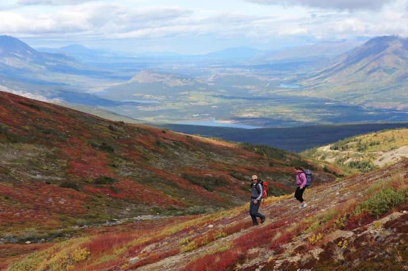 Le mont Montana est un large massif d&rsquo;origine volcanique situ&eacute; au sud de Carcross. Il couvre une superficie de 180 m2 et son sommet principal, le Montana, atteint 2&thinsp;207 m&egrave;tres d&rsquo;altitude.<br /><br />Une vaste partie de la montagne fait partie du territoire que la Premi&egrave;re nation Carcross-Tagish a obtenu lors de la revendication territoriale qu&rsquo;elle a n&eacute;goci&eacute;e en 2006 avec les gouvernements f&eacute;d&eacute;ral et territorial.<br /><br />La montagne est consid&eacute;r&eacute;e comme une pierre angulaire de la spiritualit&eacute; autochtone. Elle a fourni nourriture, herbes m&eacute;dicinales et refuge &agrave; de nombreuses g&eacute;n&eacute;rations de Premi&egrave;res nations avant de faire partie de l&rsquo;histoire de la Ru&eacute;e vers l&rsquo;or du Yukon.<br /><br />Photo : Randonneurs au mont Montana<br />Cr&eacute;dit photo : Gouvernement du Yukon, Derek Crowe