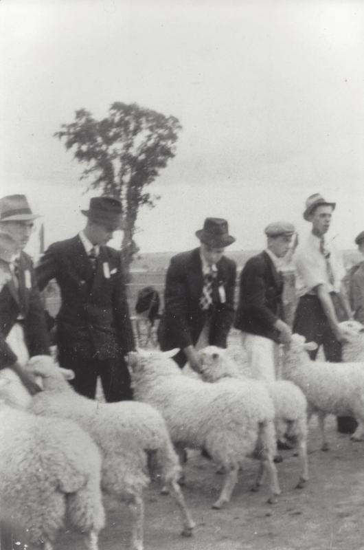 <p>Vers 1945, on inventorie neuf &eacute;leveurs de bovins, un de porcs, quatre de moutons, deux de renards, deux de chevaux, plusieurs de vaches laiti&egrave;res et de volailles. Les moutons, entre autres, font la fiert&eacute; de Saint-Augustin. Ils sont r&eacute;guli&egrave;rement prim&eacute;s &agrave; des expositions, dont celle de Qu&eacute;bec &agrave; compter de 1910.<br /><br />Sur la photo : Henri Juneau (le deuxi&egrave;me &agrave; partir de la droite) participe au concours de jeunes &eacute;leveurs d&rsquo;agneaux lors de l&rsquo;exposition agricole de Saint-Augustin, le 12 septembre 1940.<br /><br />Photo : &copy; SHSAD</p>