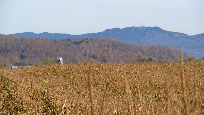 <p>Vous pouvez emprunter le chemin Tour du Carr&eacute; pour admirer les paysages agricoles et une vue sur le Mont-Tremblant au loin. &Agrave; la fin du chemin, tournez &agrave; gauche sur le chemin Carole et &agrave; gauche sur la route 323 pour reprendre le parcours.</p>