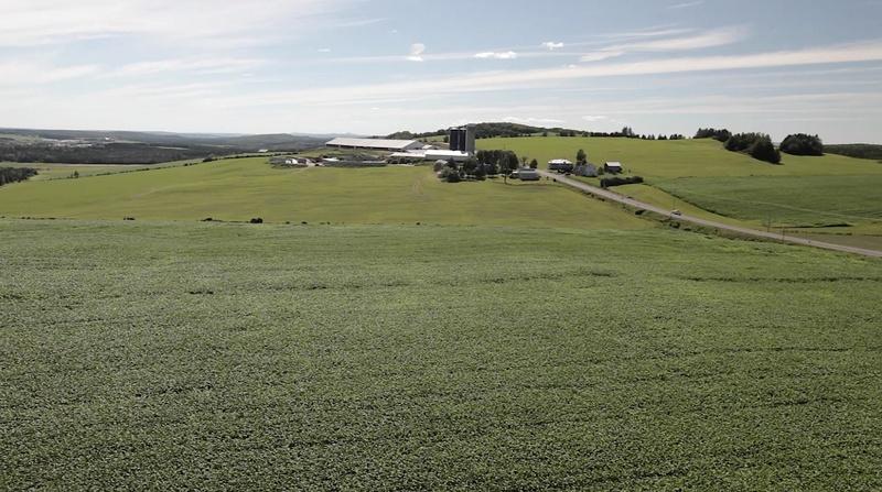 <p>Encore aujourd&#39;hui le volet agricole fait partie int&eacute;grante de la culture &agrave; Saint-Odilon. Les petites fermes de jadis ont laiss&eacute;es place &agrave; des entreprises fleurissantes et prosp&egrave;res.&nbsp;<br /><br />Source :&nbsp;Site internet Municipalit&eacute; de Saint-Odilon (2013)</p>
