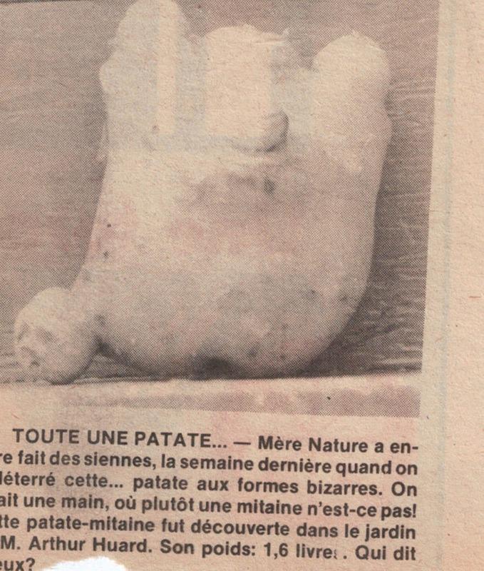 <p>Article paru dans un journal de la r&eacute;gion<br /><br />Source: Jardinier Huard</p>