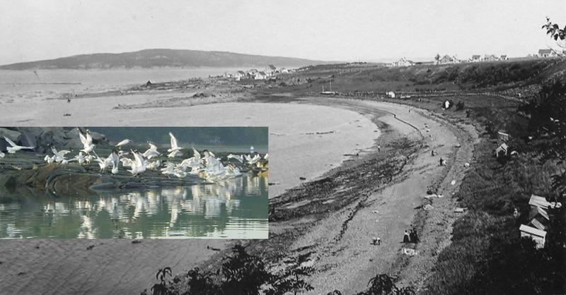 <p>Au c&oelig;ur de la nature de Cacouna, les champs, la mer, les bois, la plage&hellip; tous ces lieux pr&eacute;f&eacute;r&eacute;s du jeune &Eacute;mile, repr&eacute;sentaient, comme pour les oiseaux sauvages, des refuges et des abris contre tous les dangers et les ravages de la vie.<br /><br />Source photo :<br />Photo Ernest Mercier, vers 1890, coll. Lynda Dionne et Georges Pelletier<br />Go&eacute;lands s&rsquo;envolant de la petite anse, photo Yvan Roy 2010<br />&nbsp;</p>