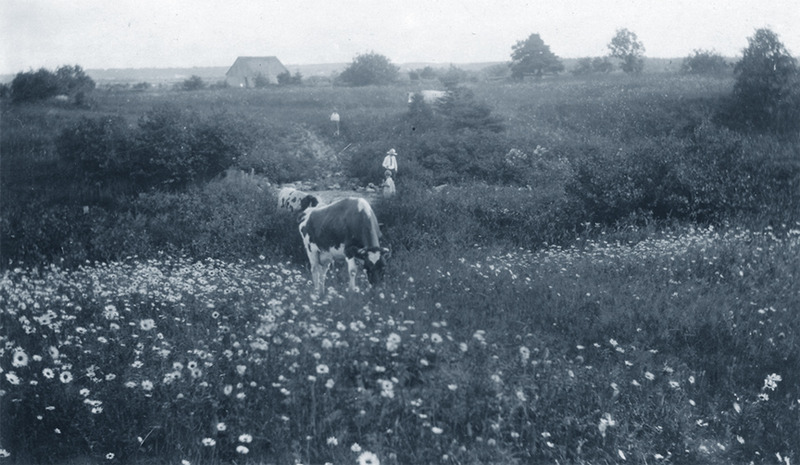 <p>Vaches en pacage dans les champs &agrave; proximit&eacute;.&nbsp; Pour la traite du soir, les enfants du fermier devaient courir les pr&eacute;s pour qu&eacute;rir les b&ecirc;tes.<br /><br />Rien de plus juste que de dire que certains po&egrave;mes de Nelligan semblent avoir &eacute;t&eacute; influenc&eacute;s par le charme de Cacouna. Dans bien des compositions, le po&egrave;te int&egrave;gre des &eacute;l&eacute;ments provenant directement du paysage de ce milieu champ&ecirc;tre : couleurs, perspectives, ambiance de jours et de nuits&hellip; Et combien de trouvailles de nature langagi&egrave;re dans les po&egrave;mes champ&ecirc;tres!<br /><br />Dans le po&egrave;me &laquo;Presque berger&raquo;, le &laquo;je&raquo; s&rsquo;installe &agrave; l&rsquo;aise dans la nuit estivale alors que le clair de lune ondoie entre l&rsquo;&eacute;table et le fournil.&nbsp; On admire ici le charme d&rsquo;une nuit paisible &eacute;tendue sur un paysage rustique. (Paul Wyczynski, Nelligan &agrave; Cacouna, p.65-66)<br /><br />Source photo:<br />Photo Mary-Ann Dunnigan, coll. R&eacute;al Rioux<br />&nbsp;</p>