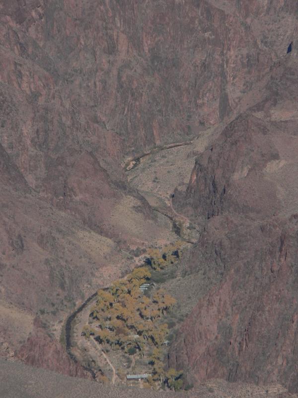 <p>Arriver au Phantom Ranch n&#39;est pas de tout repos. &Agrave; 1400m au bas du versant sud, on peut seulement y acc&eacute;der &agrave; pied, en mule ou en bateau. Vous remarquerez peut-&ecirc;tre les ruines d&#39;une maison &agrave; plusieurs pi&egrave;ces. Ce sont les vestiges d&#39;un site pueblo indig&egrave;ne datant de 1050 av. J.-C. De trente &agrave; quarante familles Hisatsinom (le nom utilis&eacute; par les Hopi, les descendants de ce peuple pueblo) ont v&eacute;cu ici en utilisant cet endroit pour chasser et cultiver.<br /><br />Le canyon peut ressembler &agrave; un d&eacute;sert avec peu de nourriture et de mat&eacute;riaux pour y loger, mais les apparences sont trompeuses. Les fermiers utilisaient la v&eacute;g&eacute;tation indig&egrave;ne, notamment l&#39;agave et les cactus comme sources d&#39;alimentation. Avec les populations de chevreuils et de mouflons, la chasse rapportait beaucoup de nourriture.<br /><br />Le chemin vers Phantom Ranch en mule prend une journ&eacute;e enti&egrave;re et il faut r&eacute;server des mois &agrave; l&#39;avance. Vous allez remarquer un changement de temp&eacute;rature lors de votre descente; le Grand Canyon est une montagne invers&eacute;e. Ainsi, la temp&eacute;rature aux sommets est beaucoup plus froide qu&#39;au bas du canyon.<br /><br />Phantom Ranch est entour&eacute; de peupliers et de plusieurs esp&egrave;ces d&#39;herbes et d&#39;arbustes. Toutefois, les plantes qui y poussent ne sont pas toutes d&#39;ici. Le Tamarisk vient d&#39;Eurasie. Il est arriv&eacute; aux &Eacute;tats-Unis dans les ann&eacute;es 1800 et s&#39;est rapidement r&eacute;pandu dans les ruisseaux du sud-est aride. Phantom Ranch est aussi une oasis cultiv&eacute;e. On y retrouve d&#39;anciens vergers de p&ecirc;ches, de grenades, d&#39;oliviers et un palmier.<br /><br />En visitant Phantom Ranch, vous pouvez vous arr&ecirc;ter au National Park Service Rancher, o&ugrave; les gardes-forestiers vous donneront les conditions m&eacute;t&eacute