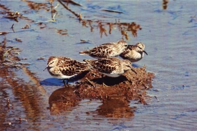 <p>Le Lac des Fran&ccedil;ais a &eacute;t&eacute; baptis&eacute; ainsi en l&#39;honneur d&#39;un fran&ccedil;ais venu s&#39;y installer. C&#39;est &eacute;galement un excellent site d&#39;observation ornithologique.</p>