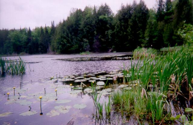 <p>Prenez le temps de bien observer ce marais, puisqu&#39;on peut parfois y apercevoir quelques h&eacute;rons, canards et tortues.</p>