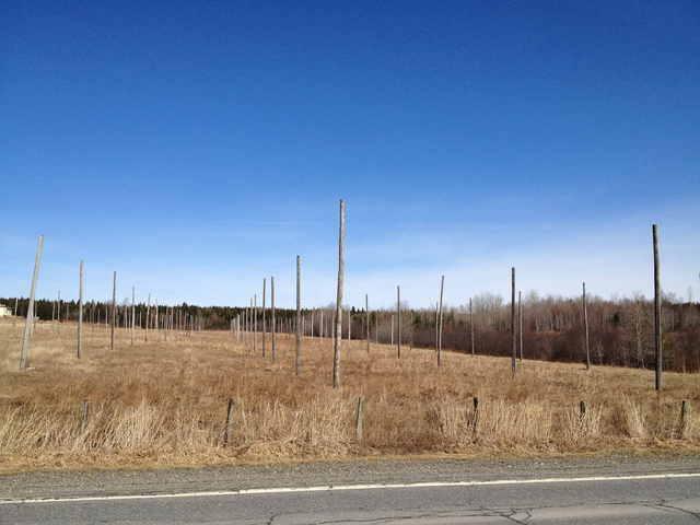 <p>Ce champ de poteaux devait servir &agrave; la culture du houblon. Toutefois, le projet n&#39;a pas vu le jour, alors il n&#39;en reste qu&#39;un dr&ocirc;le de champ de poteaux o&ugrave; les enfants viennent jouer.</p>