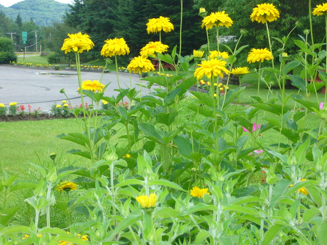 <p>Reconnue pour sa participation &agrave; de nombreux concours fleuris, East Hereford a, entre autres, particip&eacute; &agrave; un concours international d&#39;envergure.</p>