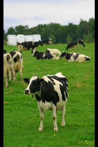 <p>R&eacute;cipiendaire de la m&eacute;daille d&#39;Or de l&#39;Ordre du M&eacute;rite agricole du Qu&eacute;bec en 1991, elle se sp&eacute;cialise dans l&#39;&eacute;levage Holstein pur sang sous l&#39;appellation PAVICO.</p>