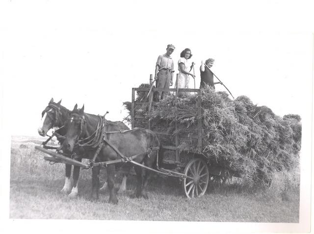 <p>De gauche &agrave; droite : Bernard Lavoie, sa s&oelig;ur Suzanne et une amie de Suzanne faisant les foins avec les chevaux, vers 1944</p>