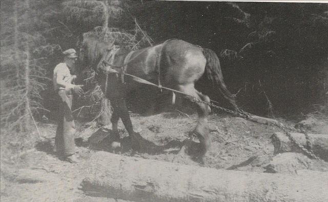 <p>Homme d&rsquo;affaires tr&egrave;s color&eacute;, il participe activement au d&eacute;veloppement du canton d&rsquo;Hereford, embauchant des travailleurs forestiers et des draveurs dont le fruit du travail se rendait en grande partie outre fronti&egrave;res.<br />En p&eacute;riode de drave, les billots voyageaient sur les rivi&egrave;res Hall et Connecticut et pouvaient se rendre jusqu&rsquo;&agrave; Boston.</p>