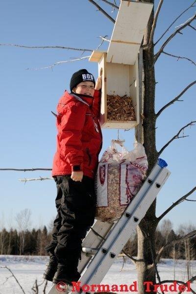 <p>C&#39;est en hiver que les b&eacute;n&eacute;voles de la Soci&eacute;t&eacute; Provancher proc&egrave;dent &agrave; l&#39;entretien des nichoirs. Lors d&#39;une tourn&eacute;e, ils mesurent le taux d&#39;occupation des nichoirs en analysant les d&eacute;tritus observ&eacute;s tel que les fientes, nids, plumes, duvet, feuilles, mousse, d&eacute;bris de coquilles, &oelig;ufs et traces de griffes. Ils vident et nettoient ensuite les nichoirs et y d&eacute;posent des copeaux de bois ou de la paille en pr&eacute;vision de la construction du nid par les prochains occupants.</p>