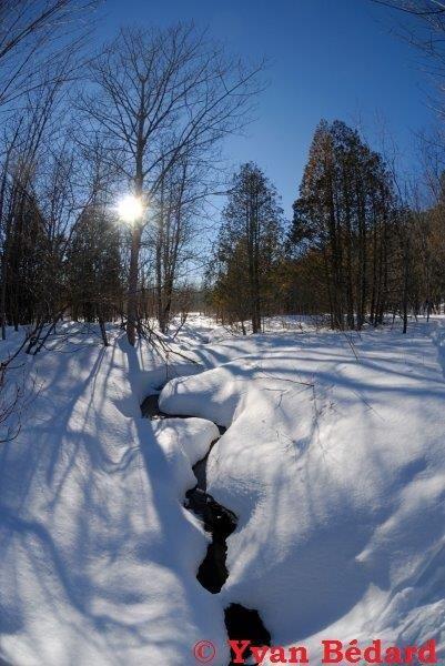 <p>L&rsquo;eau du ruisseau est m&ecirc;me soufr&eacute;e naturellement en hiver, ce qui apporte des &eacute;l&eacute;ments min&eacute;raux importants pour les animaux. Vous remarquerez peut-&ecirc;tre une odeur d&#39;&oelig;ufs pourris si vous vous approchez du ruisseau. Le soufre est un sous-produit de la d&eacute;composition des v&eacute;g&eacute;taux morts dans l&#39;eau du marais en l&rsquo;absence d&#39;oxyg&egrave;ne.<br /><br />(Photo: Ruisseau Desrochers)</p>