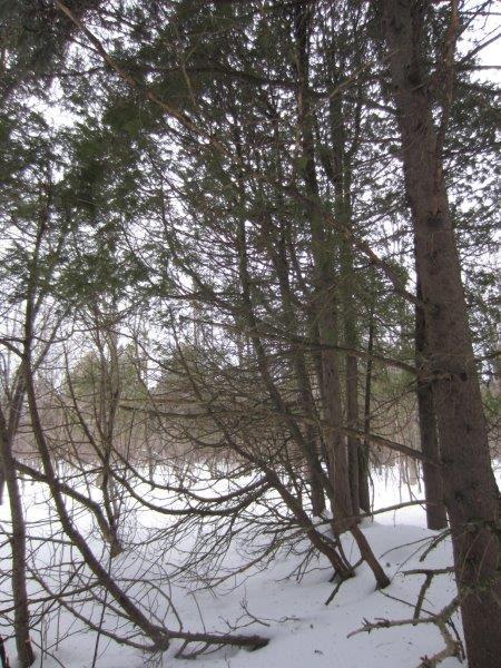 <p>Aux abords du fleuve, vous p&eacute;n&eacute;trez maintenant dans une for&ecirc;t m&eacute;lang&eacute;e form&eacute;e d&rsquo;arbres feuillus et de conif&egrave;res. Les conif&egrave;res pr&eacute;sents sont des sapins et des &eacute;pinettes, que l&rsquo;on distingue par leurs aiguilles : plates et douces au toucher pour le sapin, carr&eacute;es et piquantes pour l&rsquo;&eacute;pinette.</p>