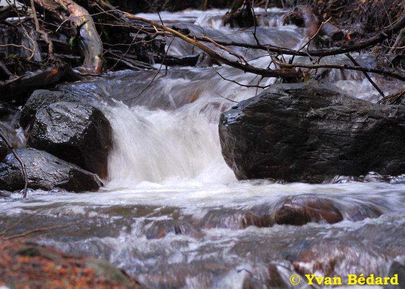 <p>La pr&eacute;sence d&rsquo;eau sur le territoire s&rsquo;av&egrave;re n&eacute;cessaire pour la faune, qui cherche des points pour s&rsquo;abreuver toute l&rsquo;ann&eacute;e. Au printemps, le d&eacute;bit du ruisseau atteint son maximum avec la fonte des neiges qui s&rsquo;ajoute aux pr&eacute;cipitations. En &eacute;t&eacute;, son d&eacute;bit devient presque nul en p&eacute;riode de s&eacute;cheresse prolong&eacute;e. Peut-&ecirc;tre avez-vous remarqu&eacute; la pr&eacute;sence d&rsquo;anciens foss&eacute;s de drainage? Ce sont les vestiges de l&rsquo;agriculture qui se pratiquait jadis sur le territoire. Ces foss&eacute;s contribuent encore &agrave; l&rsquo;&eacute;vacuation de l&rsquo;eau vers le fleuve.<br /><br />(Photo: Ruisseau Desrochers)</p>