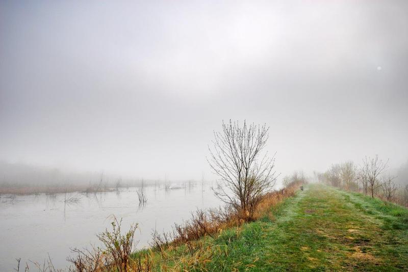 <p>Vous vous trouvez maintenant sur la digue qui a &eacute;t&eacute; construite en 1994 par Canards Illimit&eacute;s et mise en service deux ans plus tard. Elle mesure pr&egrave;s d&rsquo;un kilom&egrave;tre de long, et la profondeur moyenne de l&rsquo;eau est d&rsquo;environ 50 cm. La partie est du marais demeure la plus profonde. Le printemps, l&rsquo;eau du marais se r&eacute;chauffe plus rapidement que celle du fleuve, des lacs et des rivi&egrave;res. Les larves des insectes aquatiques s&rsquo;y d&eacute;veloppent en abondance, et les insectes adultes qui &eacute;mergent nourriront les oiseaux, les grenouilles et les poissons. La nuit venue, les chauves-souris viendront &agrave; leur tour.</p>