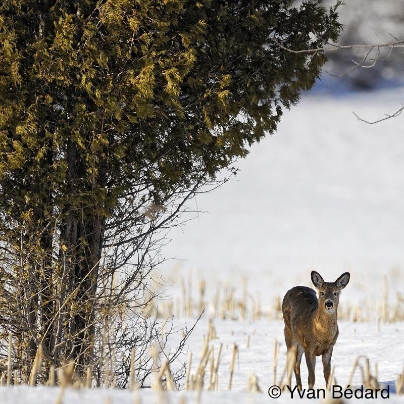 <p>Soyez aussi fid&egrave;les que les esp&egrave;ces migratrices fr&eacute;quentant le marais! Le cycle des saisons garantit tout un potentiel d&rsquo;observations captivantes. Des b&eacute;n&eacute;voles passionn&eacute;s sont d&eacute;j&agrave; &agrave; concocter les futures BaladoD&eacute;couvertes d&#39;hiver, de printemps et d&#39;&eacute;t&eacute;.<br /><br />C&#39;est un rendez-vous!<br /><br />Photo : &copy; Yvan B&eacute;dard</p>