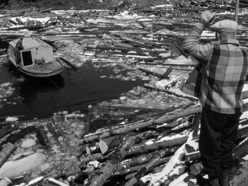 <p>Photographie d&rsquo;Euclide Thauvette et l&rsquo;alliator sur le lac Kiamika, 1956, lors du tournage du film La drave de l&rsquo;ONF.<br /><br />&laquo; Un pitogan parce que &ccedil;a marche &agrave; piston, pout-pout-pout-pout.&nbsp; Il y en avait un au Lac des &Eacute;corces, pis un autre au lac Kiamika. &Ccedil;a marchait par-dessus les billots. C&rsquo;&eacute;tait fait fort parce qu&rsquo;il ramassait tous les billots en rond. Les billots attach&eacute;s l&rsquo;un au bout de l&rsquo;autre, pis on ramenait &ccedil;a, les b&ocirc;mes qu&rsquo;on appelait &ccedil;a, sur le grand lac. On tirait les b&ocirc;mes. &raquo;<br />Philippe Saint-Amour, 80 ans, ancien draveur de 1951-1953, Chute-Saint-Philippe.</p>